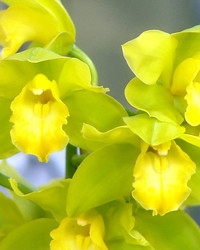 The New York Botanical Garden Orchid Show
