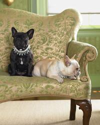 Diamond Dog Necklaces