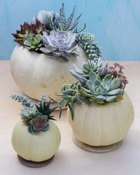 How to Make (and Repot!) Succulent Planter Pumpkins