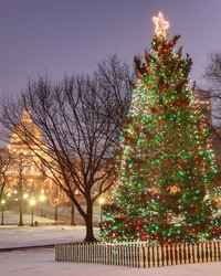 Boston's Christmas Tree Commemorates a 100th Anniversary This Year