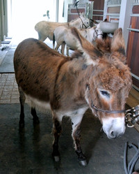 Donkey Haircuts, Craft Room Organizing, and More: The Latest from Martha's Blog