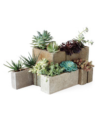 11 Creative Container Garden Ideas