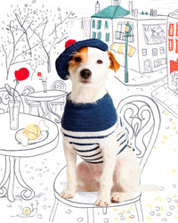 Dapper Dogs: 5 Questions for Pet Knitwear Designer Debbie Bliss