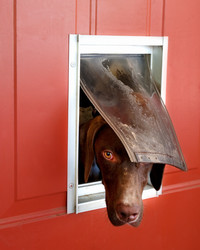 Should you get a doggie door?
