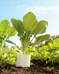 Fall Vegetables You Can Grow (Successfully!) Late in the Season