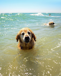 Keep Your Dog Safe and Happy In the Water