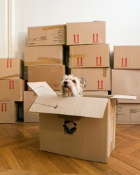 The Ultimate Guide to Moving With Dogs and Cats