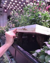 A Magical Hydroponic Garden! That's Where the Test Kitchen Team Went This Week