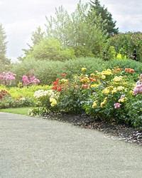 How to Ensure a New Shrub Becomes Established in Your Yard
