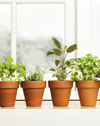 A Guide to Growing Kitchen Windowsill Herbs