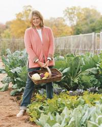 Martha's Vegetable Garden