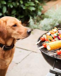 9 Summer Dangers for Pets