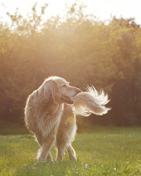 How to Keep Your Pets Safe During a Heatwave