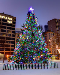 Surprise! Boston's Christmas Tree Comes From a New Place