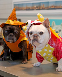 Francesca and Sharkey's Halloween 2014 Canine Costume Contest!