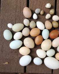 A Homegrown Blown-Egg Business