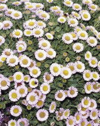 Full-Sun Spring Perennials for a Gorgeous Garden