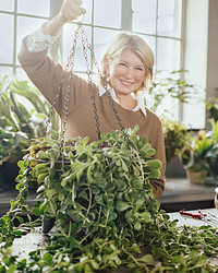 Planting 101: How to Make a Hanging Basket