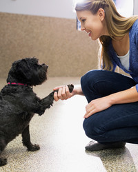 How To Find the Right Behavior Specialist for Your Dog