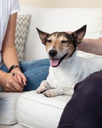 Four Ways to Help Your Pet Feel Calm and Comfortable with Visitors