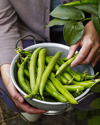 Plant a Vegetable Garden: Here's Our Guide From Soil to Seeds to the Tools You Need