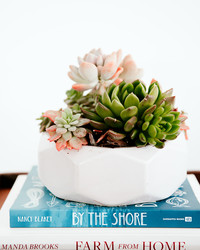 How to Keep Your Succulent Plants Alive