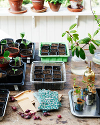Where to Order the Best Seeds for Your Garden