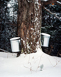 How One Family Makes (and Cooks With!) Their Own Maple Syrup