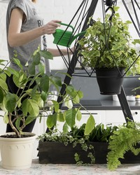 How To Keep Your Houseplants Happy In the Winter