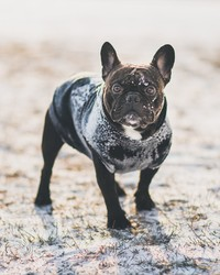 Protect Your Pets From The Cold