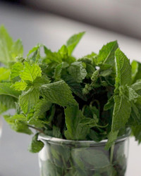 kitchen-conundrums-mint-pesto-0814.jpg