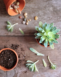 How to Use Rooting Hormone When Propagating Plants