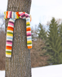 Here's Why You're Seeing Trees Bundled up in Scarves this Winter