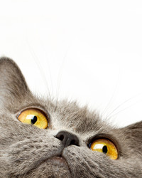 The 4 Things Your Cat Wants You To Know