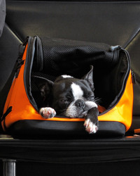 What Your Need to Know About Flying with Pets
