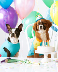 How One Birthday Party Helped Celebrate Pups In Need