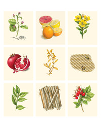 The Most Effective Botanical-Based Beauty Products