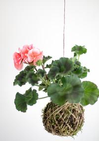 Craft your own hanging Kokedama garden