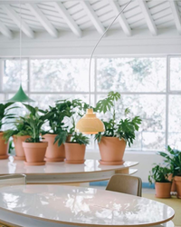 Greenhouse or Office? This Coworking Space Combines the Best of Both