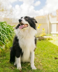 Six Things You Can Do to Make Your Backyard More Dog-Friendly