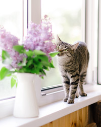 How to Keep Your Pets from Destroying Your Plants
