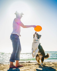 A Dog Owner's Guide to A Day At The Beach