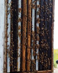 Hive Mentality: Five Beekeeping Tips from Kara Brook