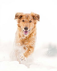 5 Tips to Keep Your Pet Happy and Healthy This Winter