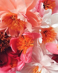 Susan Beech Shares Her Secret to Magical Blooms