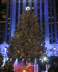 Introducing: This Year's Rockefeller Center Christmas Tree