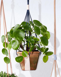 Strapped Leather Plant Hanger
