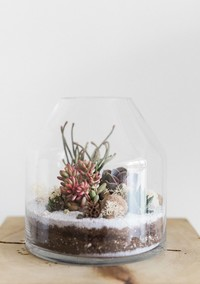 How to Make and Care for a Succulent Terrarium