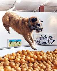 Take a Tour Inside the World's First Art Exhibit for Dogs
