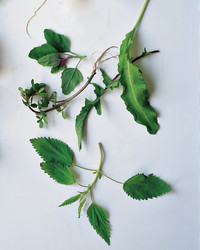 In the Weeds: A Beginner's Guide to Foraging